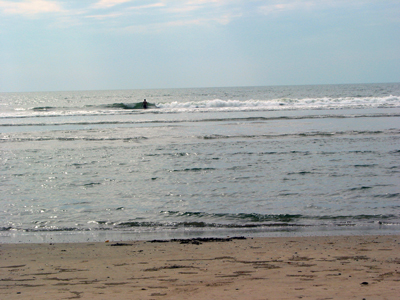 LEATHER-TUNA-Goa-beach2.jpg