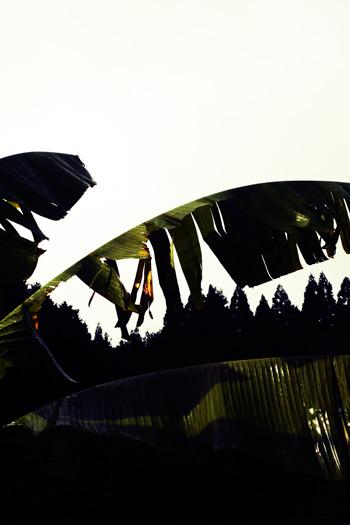 LEATHER-TUNA-garden.jpg